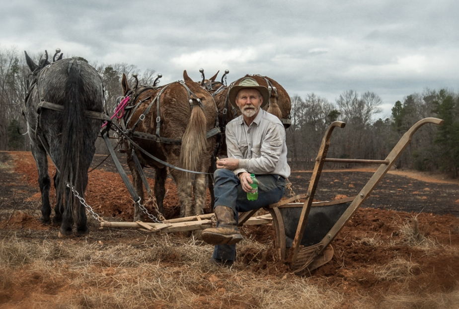 wayne hussey_mules plowing_02