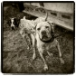 bird-dogs_2_bw