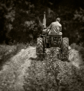 cultivating-corn_rear_bw