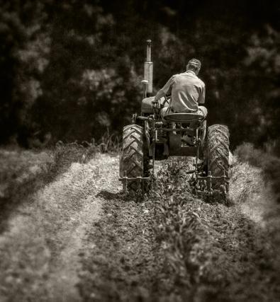 cultivating-corn_rear_bw