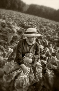 female-tobacco-worker
