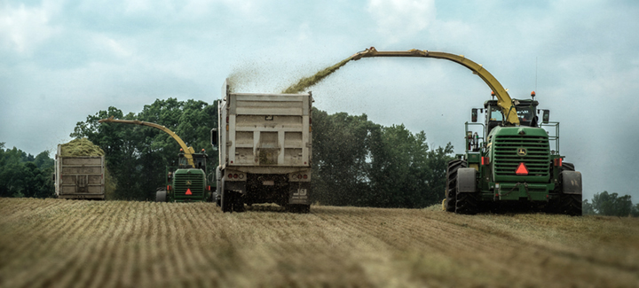 mathis_wheat-silage_2015_23