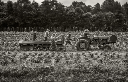 Tractor Pull – Dan Routh Photography