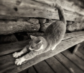 stretching-mill-cat_bw