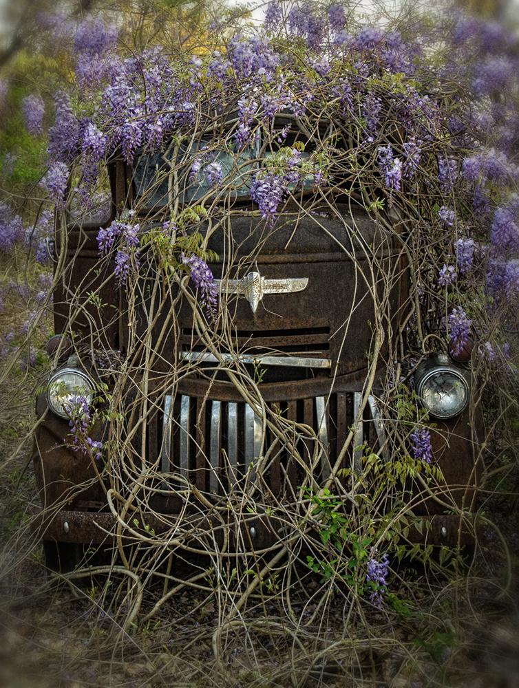 truck_wisteria