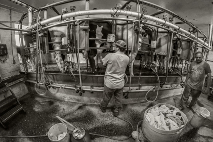 williams-dairy_fisheye_01