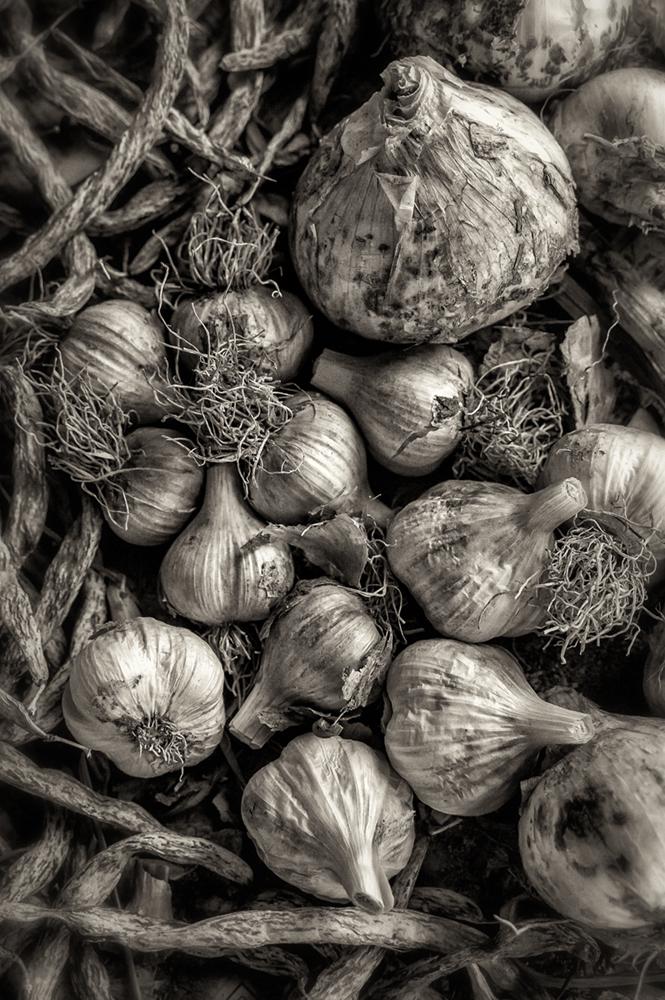 garlic_onion_drying