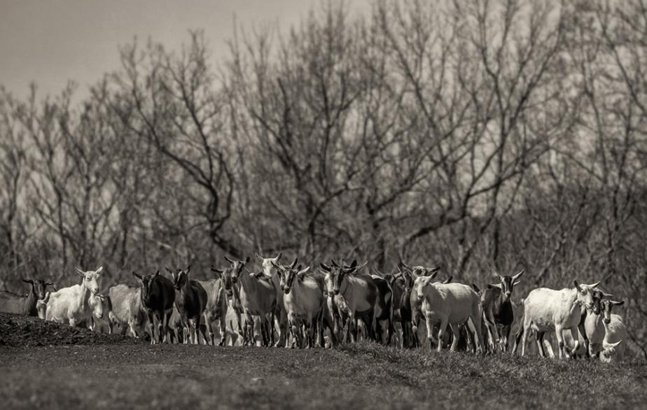 lindale dairy_2017_14
