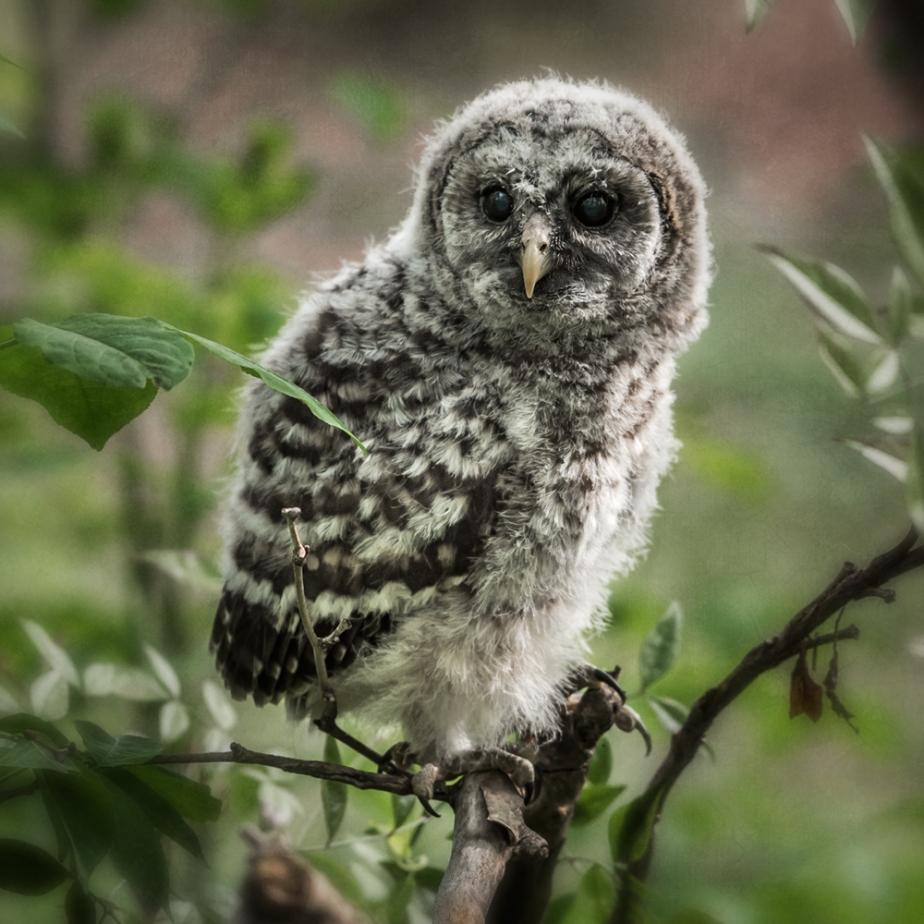 bog garden_owlet_01