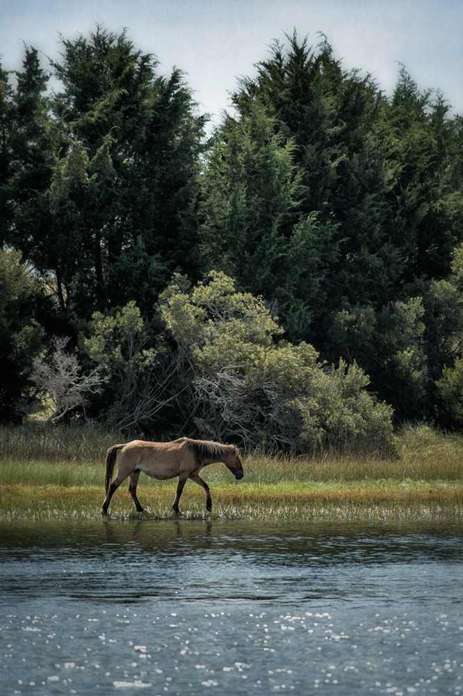 banker horse_carrot island