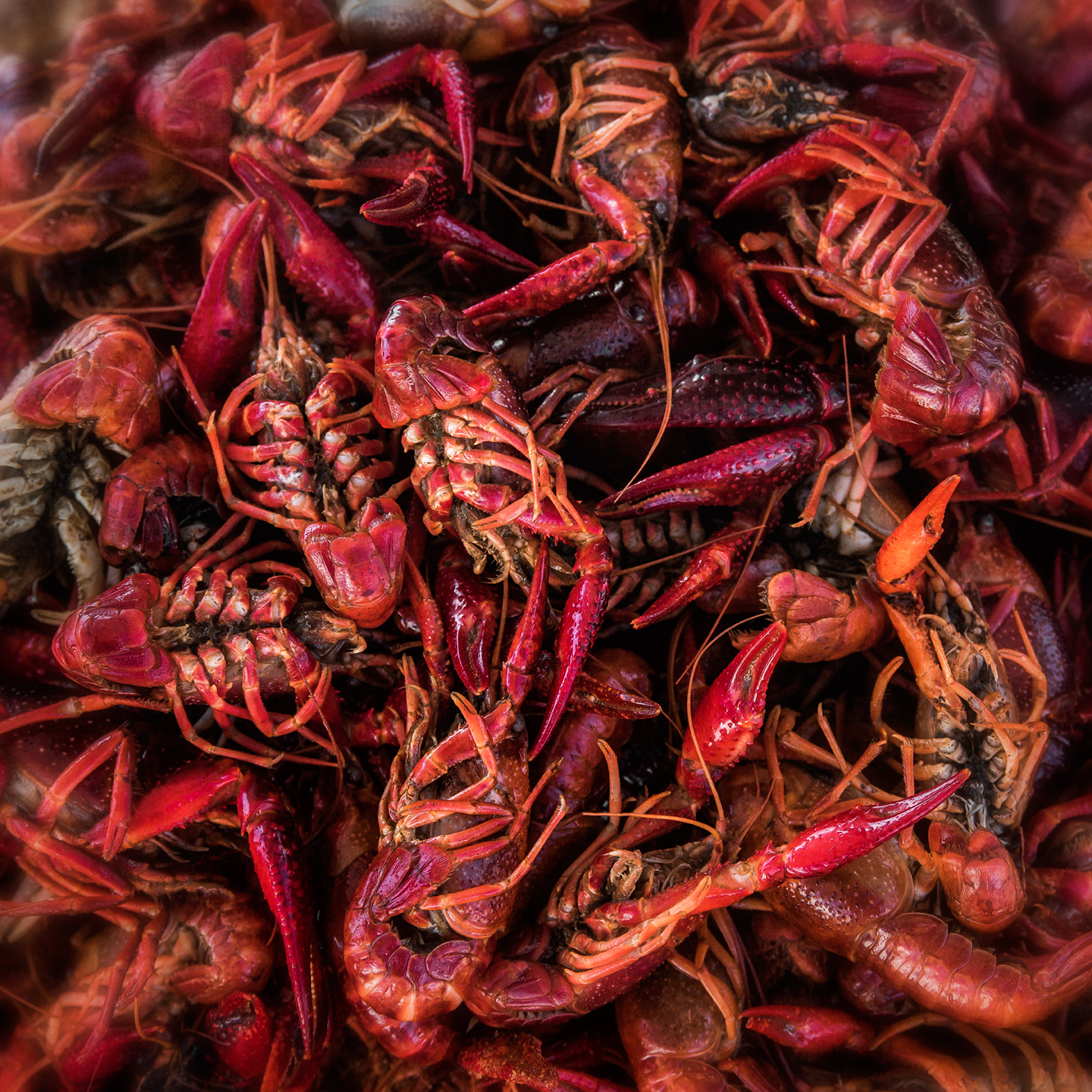 crawfish_04