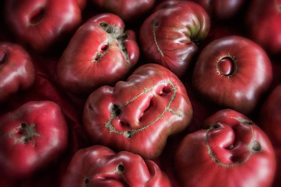 heirloom tomatos_2017_horiz