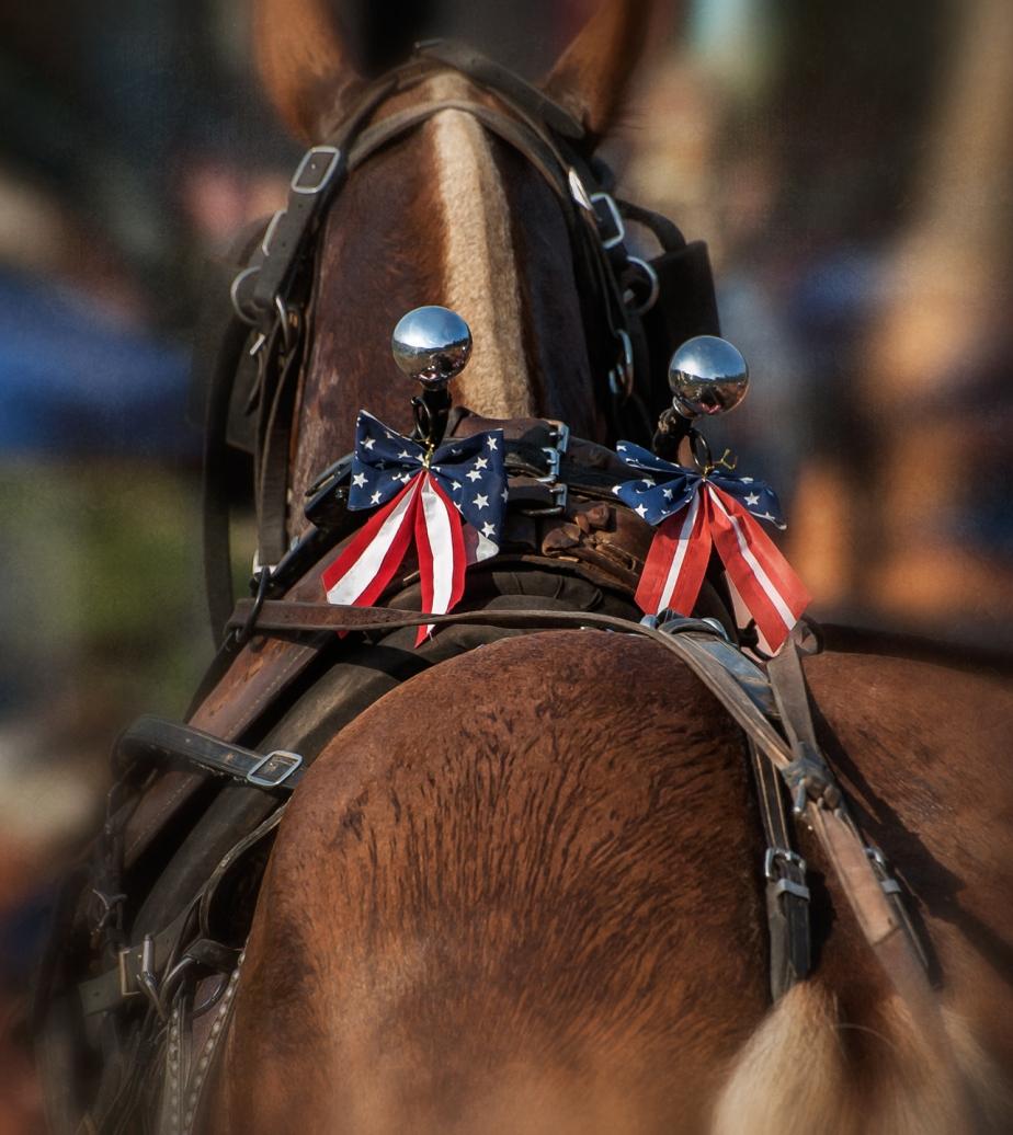 july 4_horsepull_denton