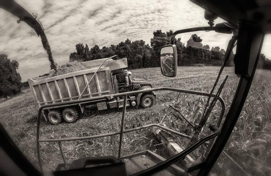 mathis_corn silage_2017_01