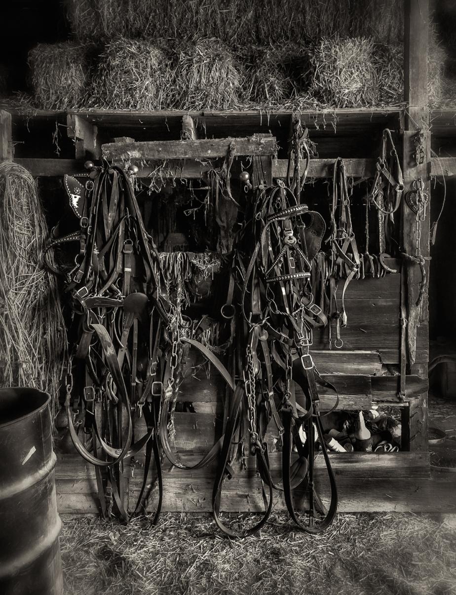 mule harness