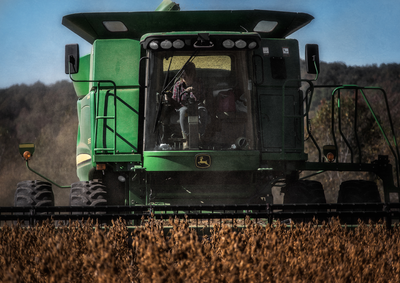 hopkins farm_soybeans_05.JPG