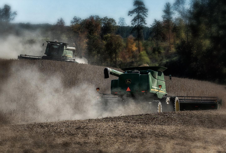 hopkins farm_soybeans_10