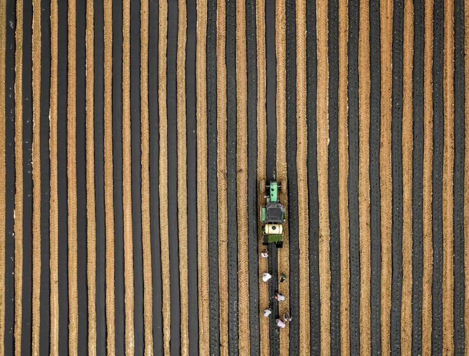 planting strawberries_drone_03