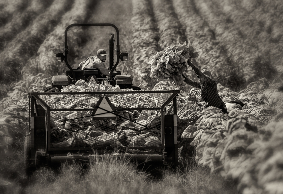 tobacco_tractor driver_2017_03