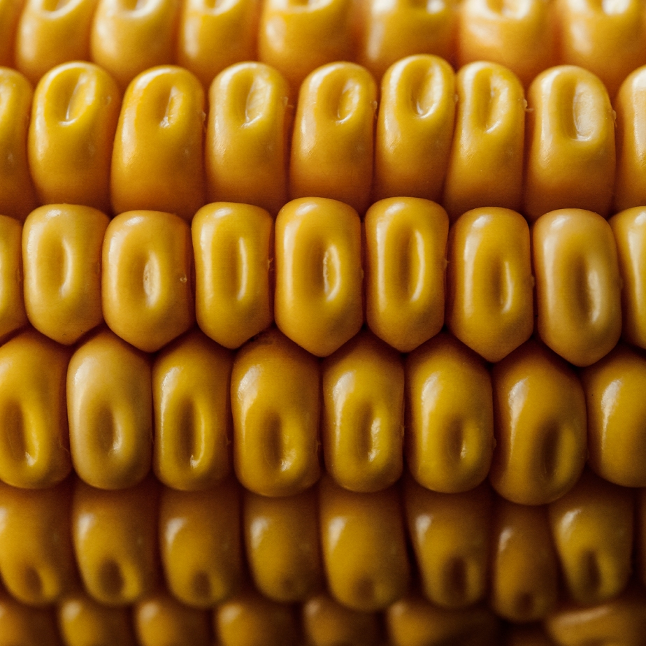 corn closeup_square