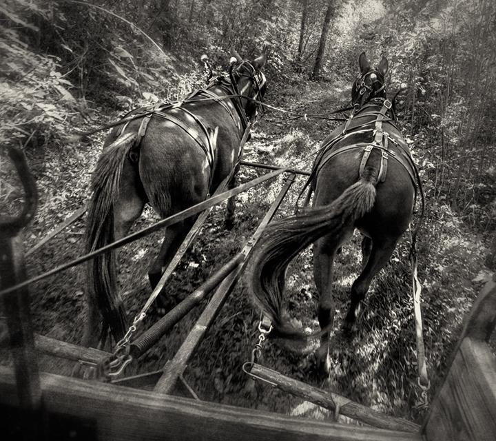 mule ride_2_bw