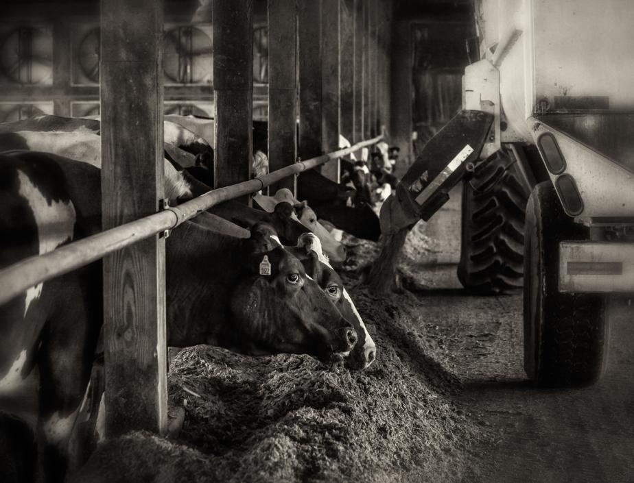 wright dairy_08