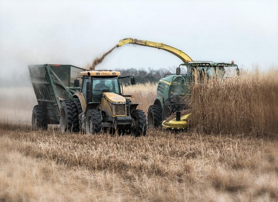 miscanthus grass harvest_02