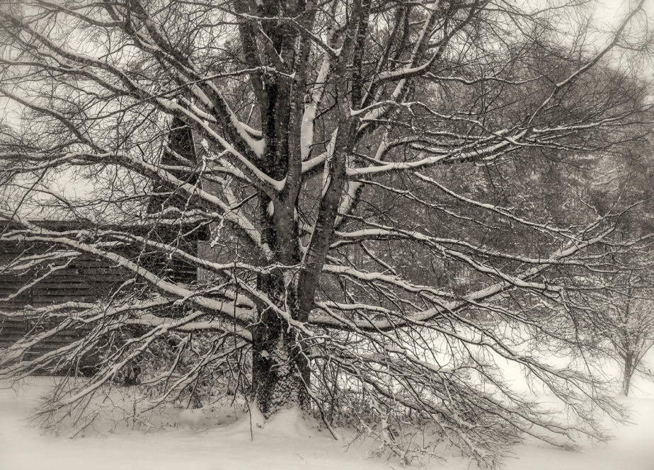willow oak_snow_2018_horiz