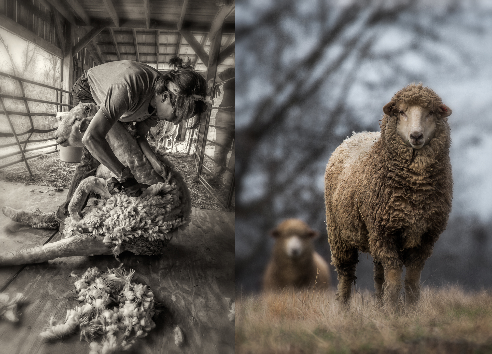 shearing_2018_group_01