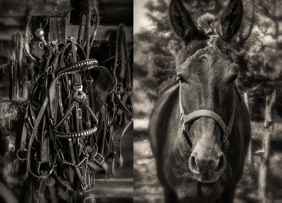 mule harness_mule_group