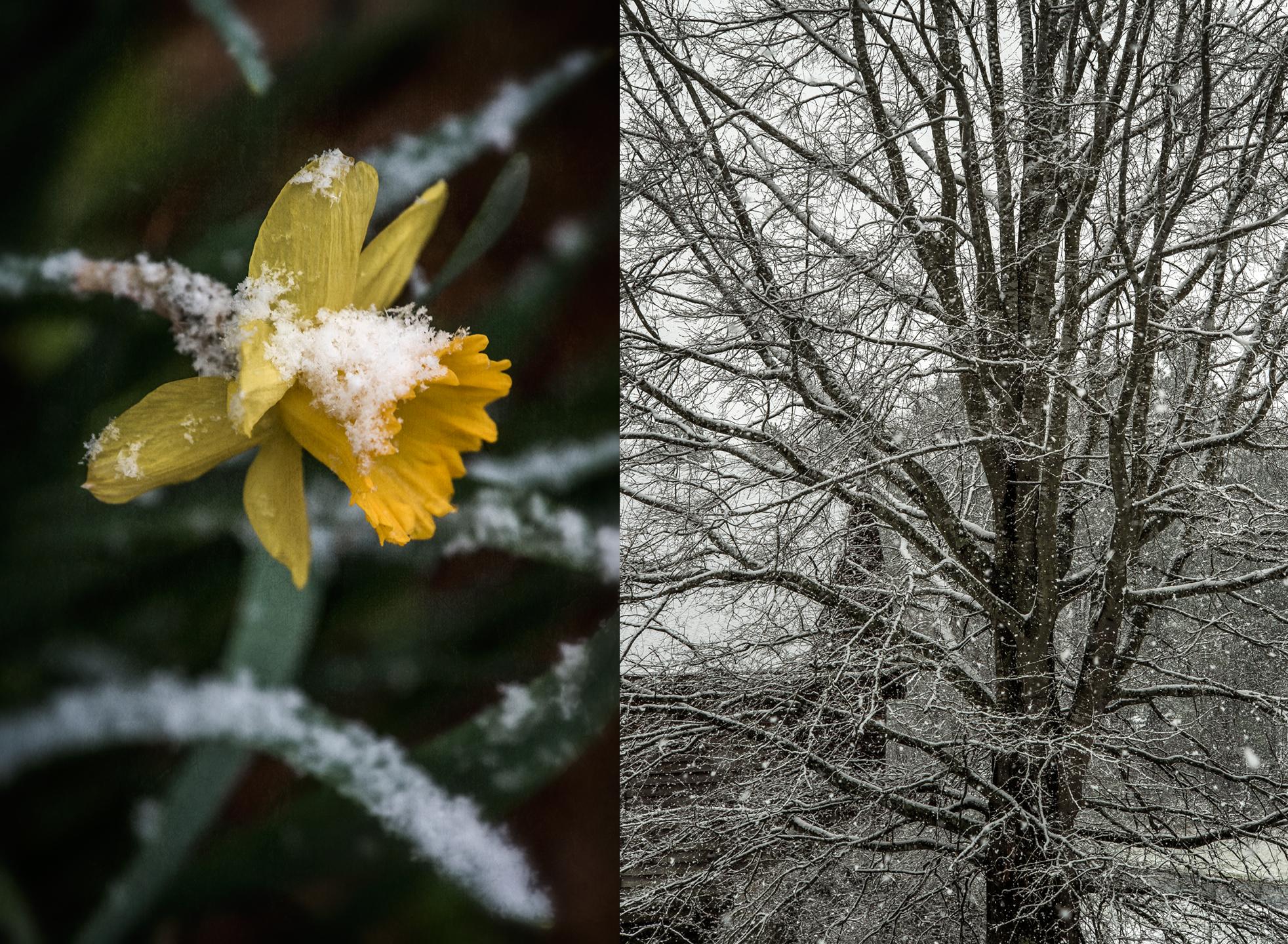 spring_2018_snow_group