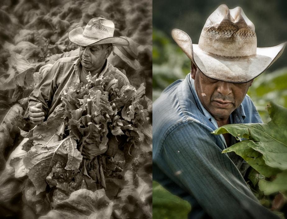 tobacco primer_group