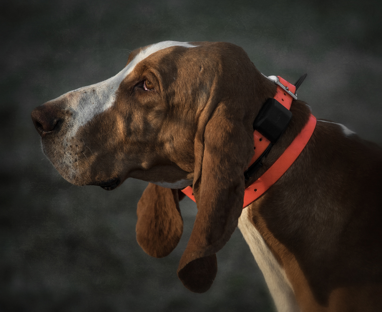 foxhound trials_hoffman nc_27