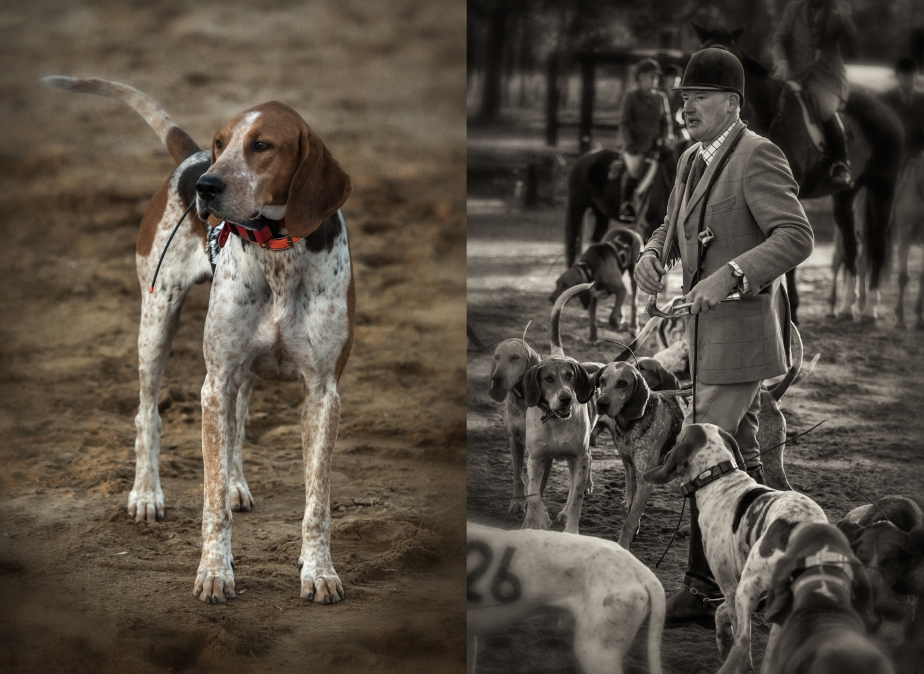 foxhound trials_hoffman nc_group_02