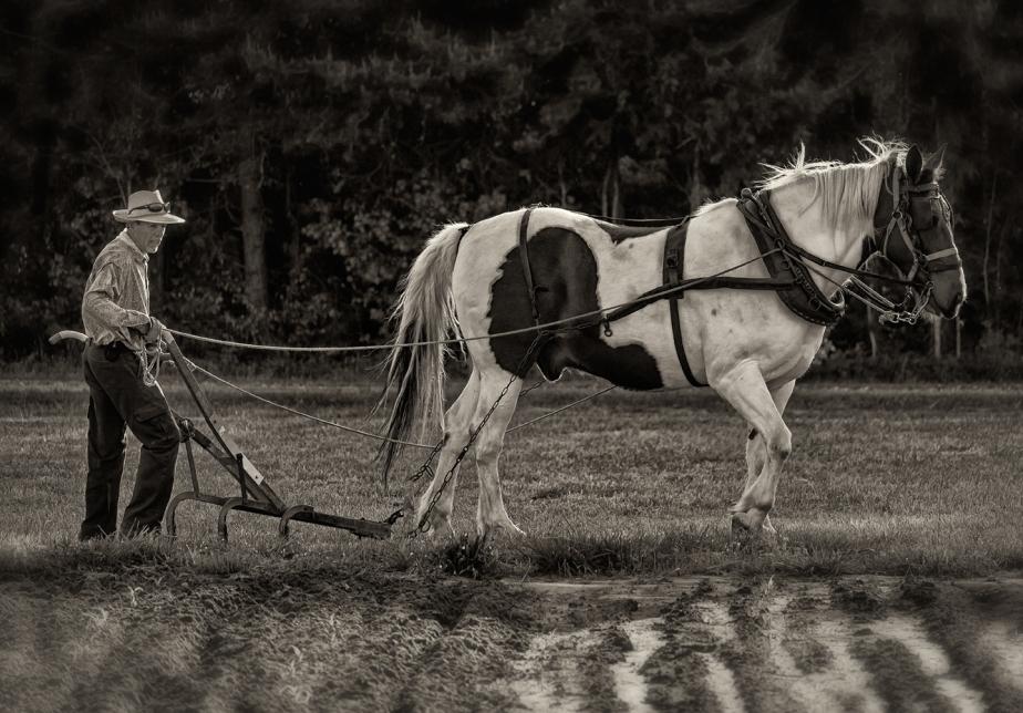 climax nc_plowing corn_horse drawn