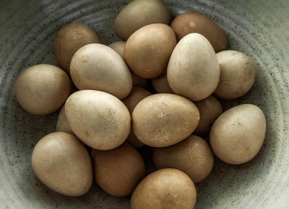 guinea eggs_bowl_redo