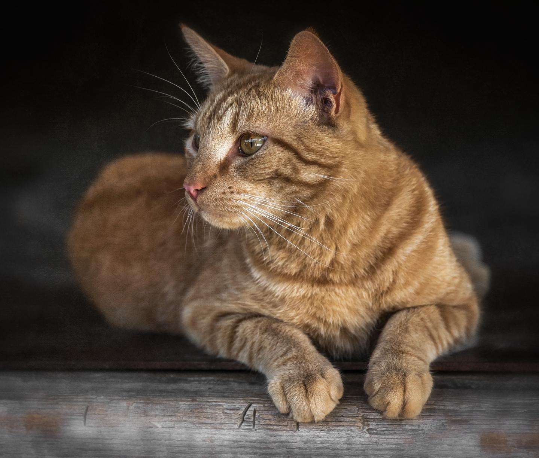 cecil_mill cat