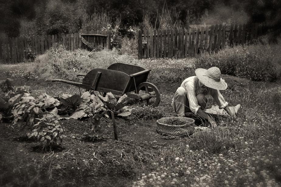 old salem gardener_bw_02