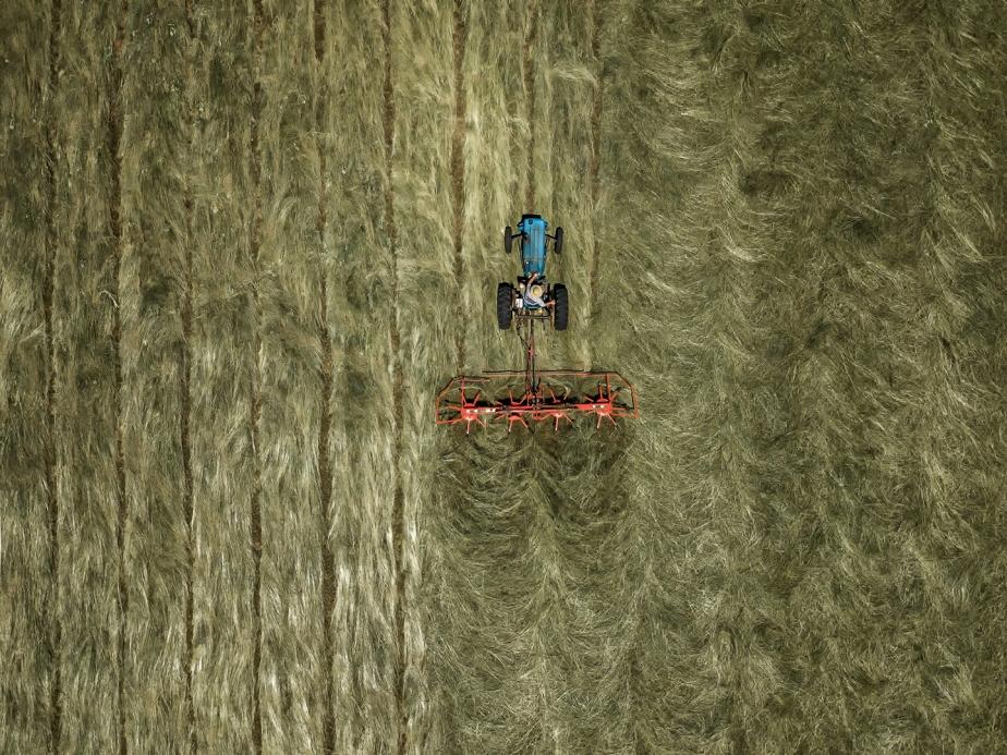 teddering hay_02