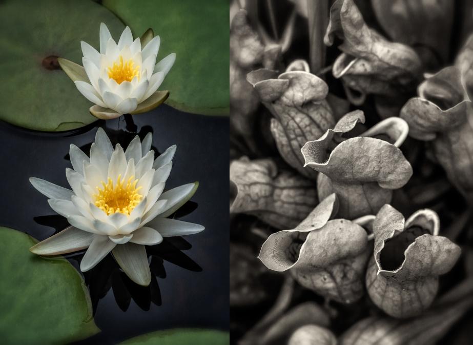 nc botanical gardens_group_01