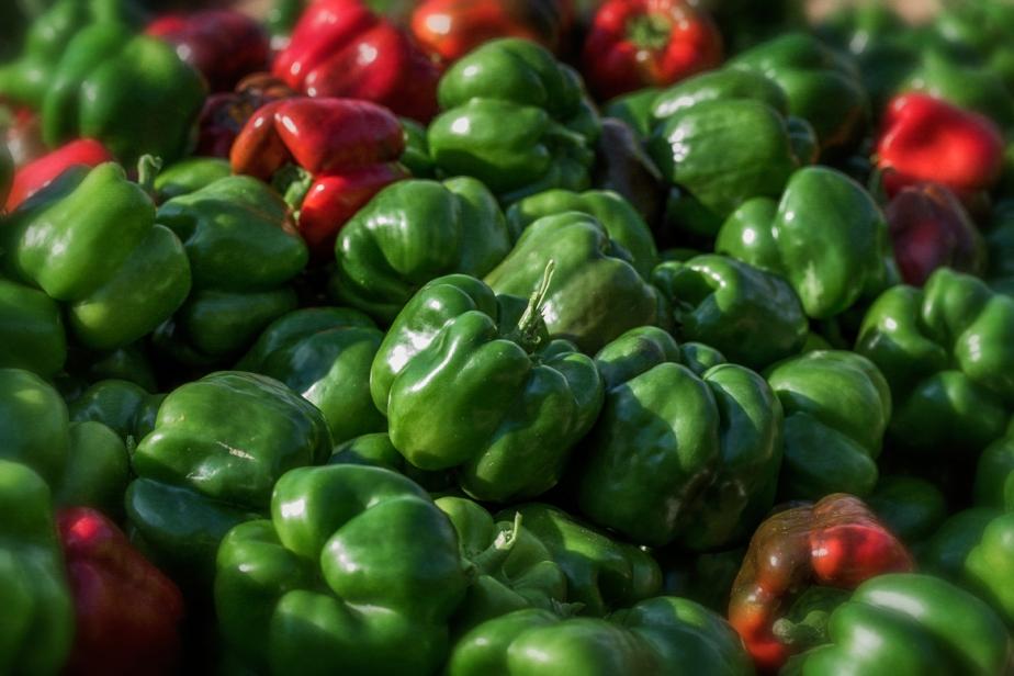 walker_picking peppers_7_19_18_09
