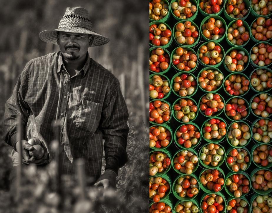 whitaker_picking tomatoes_2_27_18_group_02