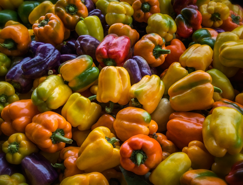 pepper harvest_horiz