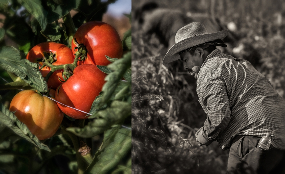 whitaker_picking tomatoes_2_27_18_group_01