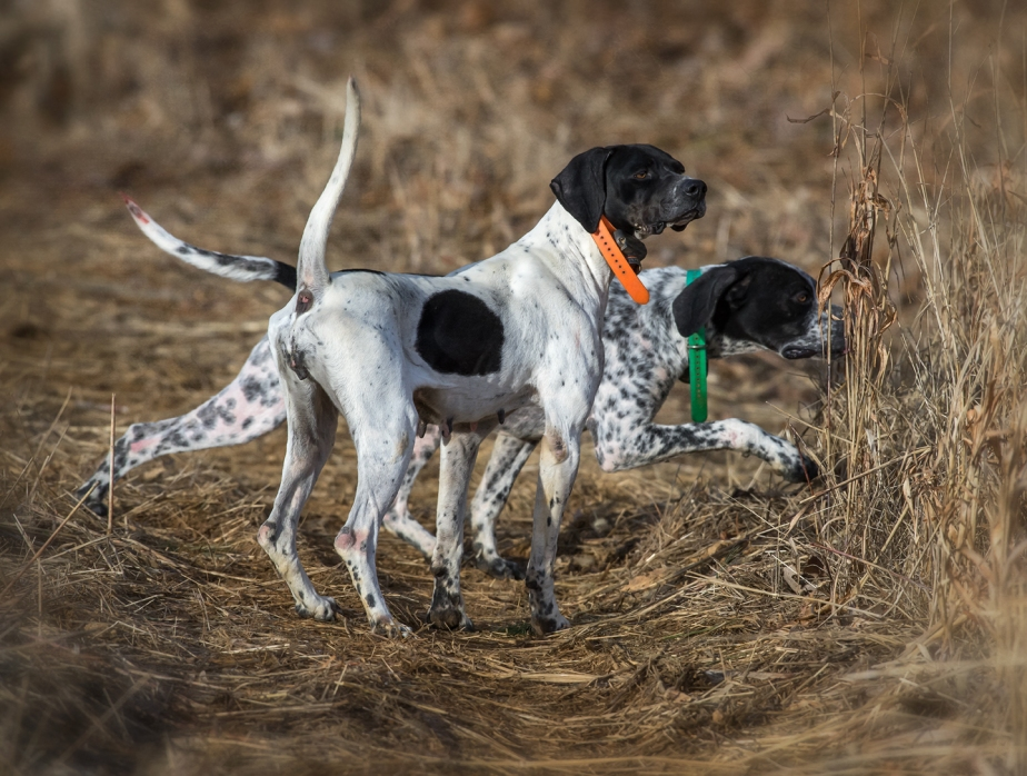 primland_two pointers working