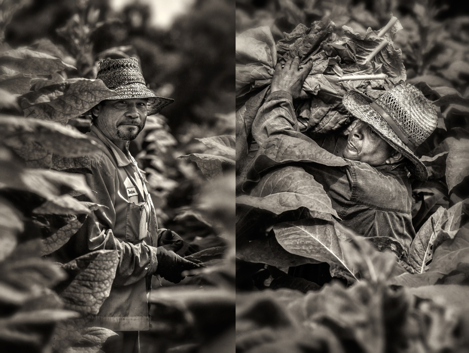 tobacco worker_2015_2014_whitakers_group