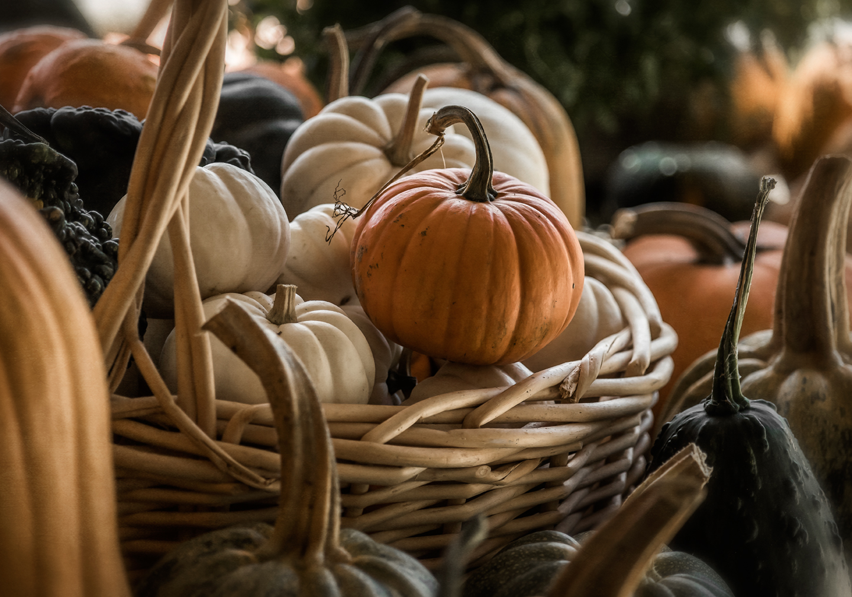 bernies berries_pumpkins_01