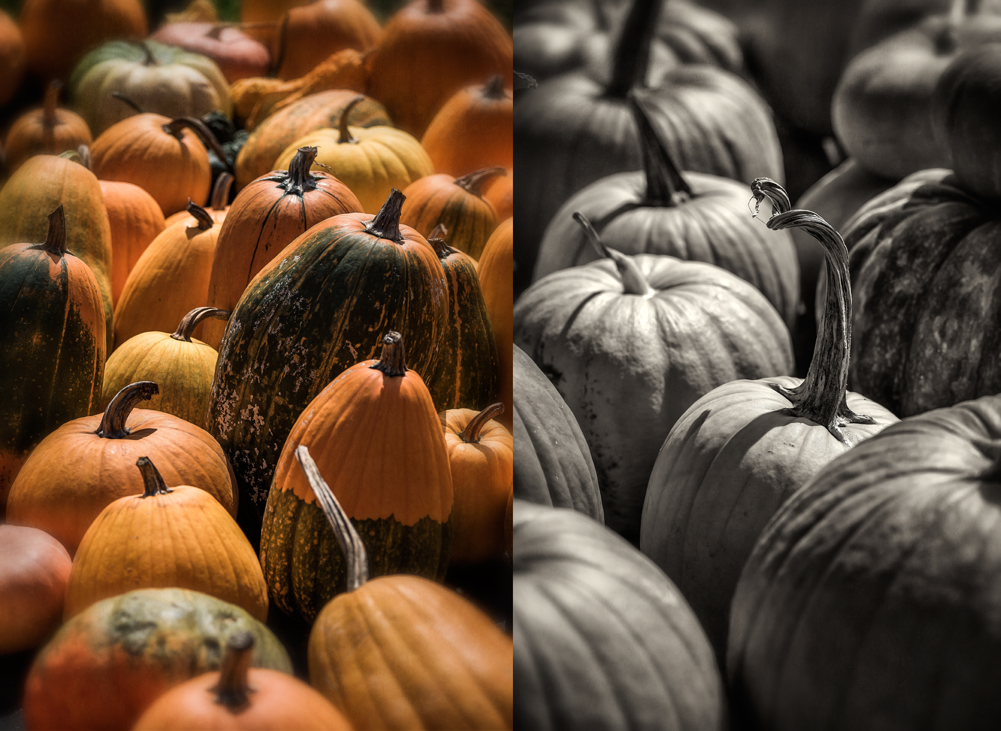 bernies berries_pumpkins_group_01
