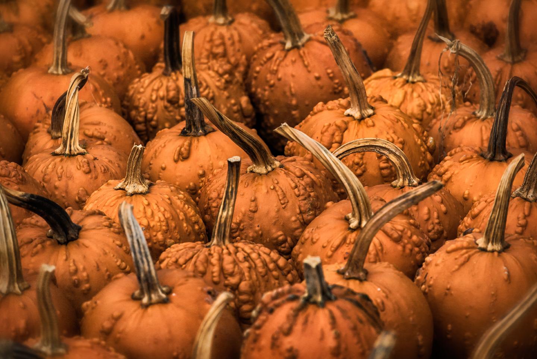 whitaker_pumpkins_01