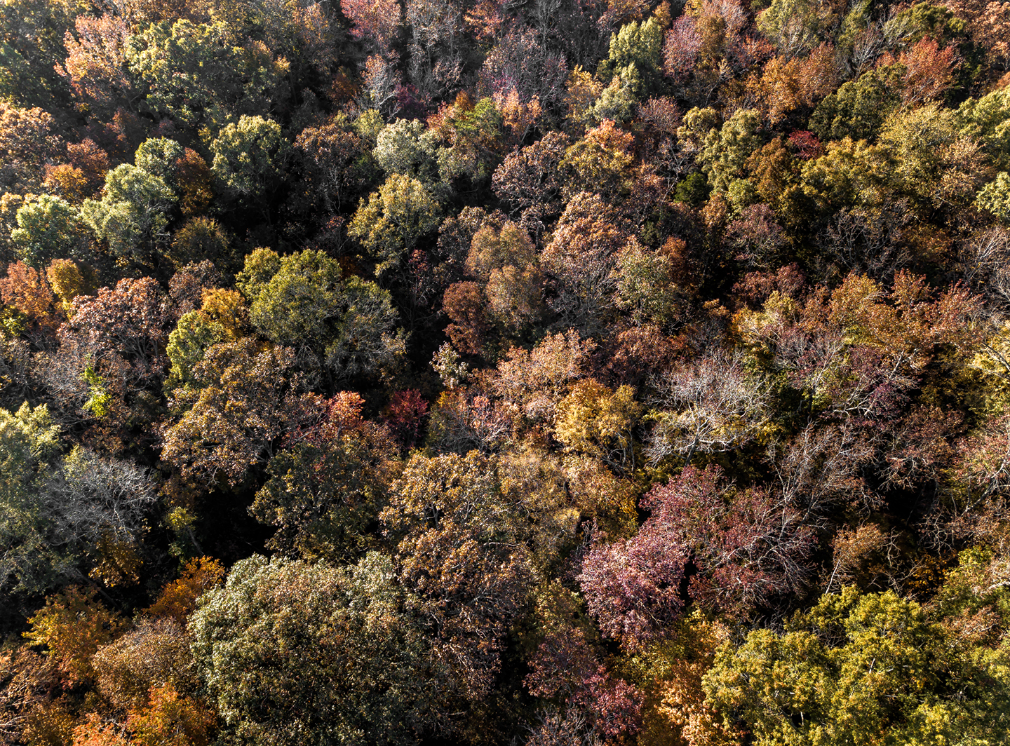 fall leaves_grays chapel_drone_03